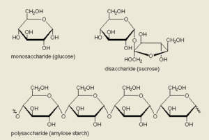 saccharides means sugar