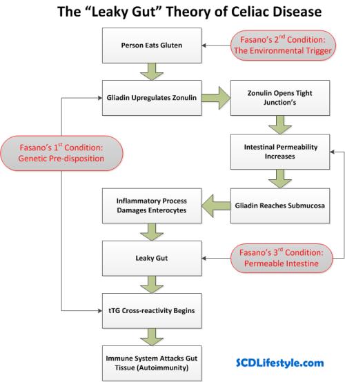 leaky-gut-theory-of-celiac-disease3