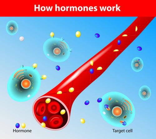 Gut-Hormone-Connection