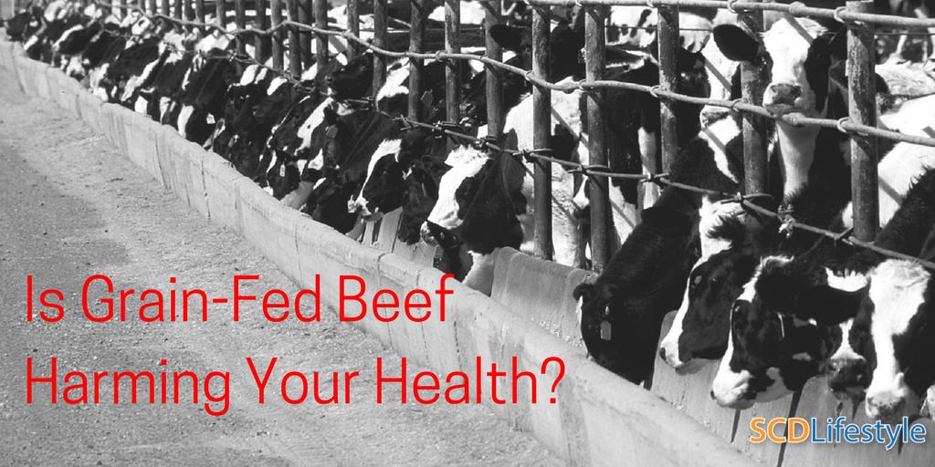 Is grain-fed beef harming your health?