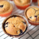 nut-free, grain-free blueberry muffins